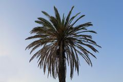 Palm tree against blue sky. Its leaves like a sun will light up your day! royalty free stock photo