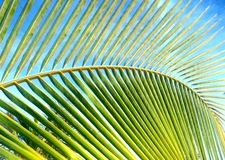 Palm tree against blue sky stock photography