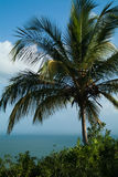 Palm tree against the Blue Sky and Sea. In Dominican republic Royalty Free Stock Image