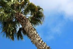Palm Tree Against a Blue Sky Stock Photos