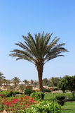 Palm tree against blue sky. Tropical nature Stock Photo