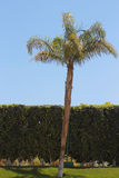 Palm tree against blue sky. Tropical nature Royalty Free Stock Photos