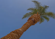 Palm tree against blue sky Royalty Free Stock Photos