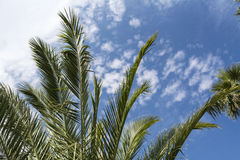 Palm tree against cloudy sky Stock Photo