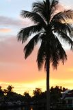 Palm tree against colorful sunset. A tropical palm tree against colorful sunset Stock Photo