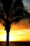 Palm tree against dramatic sky royalty free stock photography