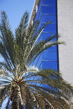 Palm tree against glass buildings Stock Photography