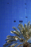 Palm tree against glass buildings Stock Photos