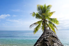 Palm tree against sky. Looking up the trunk of a palm tree towards its leaves and a beautiful tropical ocean and bright blue sky Stock Image