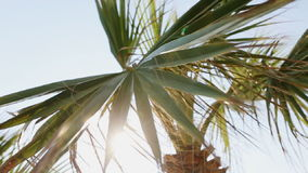 Palm tree against the sky.  stock footage