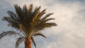 Palm tree against the sky with clouds.  stock video footage