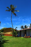 Palm tree against the sky, the Club Koggala Village Stock Images