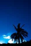 Palm tree against sky. Palm tree against deep blue sky, Thailand Stock Photography