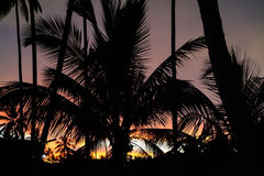Palm Tree against the Sky illuminated by the Sunset. Silhouette Royalty Free Stock Image