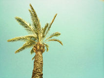 Palm tree against the sky, retro image Stock Image