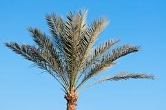 Palm tree against sky Stock Photo