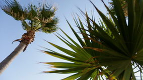 Palm tree against the sky and wedding tent stock video footage