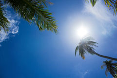 Palm tree against sun Royalty Free Stock Photography