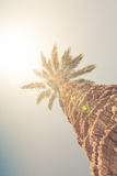 Palm tree against sunny sky Royalty Free Stock Image
