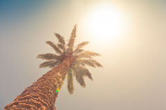 Palm tree against sunny sky Royalty Free Stock Images