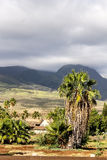 Palm tree against the west Maui mountains. Background in Lahaina, Hawaii stock photos
