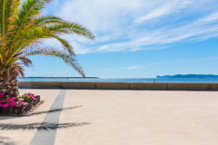 Palm tree in Alghero sea front Royalty Free Stock Photo