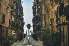 Palm tree alley in Barcelona, Spain Royalty Free Stock Photos