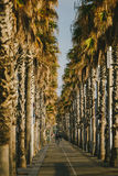 Palm tree alley in Barcelona, Spain Stock Photo