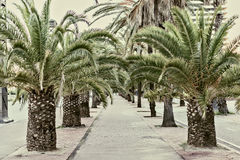 Palm tree alley in Barcelona, Spain Vintage style photo Royalty Free Stock Photos