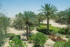 Palm tree alley with bushes in the arabic luxury desert resort Royalty Free Stock Photo