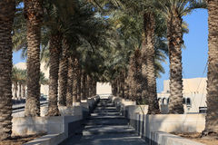 Palm tree alley in Doha, Qatar Stock Photo