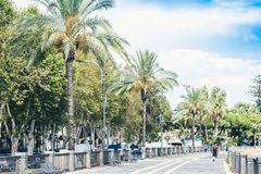 Palm tree alley with metal benches in Catania, Sicily, Southern Italy.  stock images