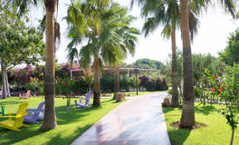 Palm tree alley in resort, view Royalty Free Stock Images