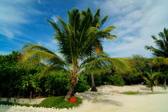 Palm Tree Alley Royalty Free Stock Images