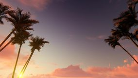 Palm tree alley on sunset stock footage