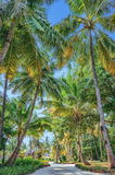 Palm tree alley in tropical garden at Maldives Stock Photos