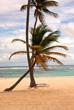 Palm tree along the caribbean sea Stock Image
