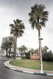 Palm tree along the road. Palm trees lining the road in benalmadena spain stock photos