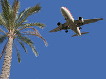 Palm Tree And Airplane Stock Photo
