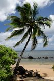 Palm tree at Anini beach Stock Photos