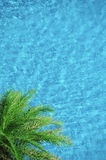 Palm tree on aqua blue swimming pool background Royalty Free Stock Photography