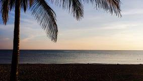 Palm tree on Atlantic ocean beach at sunrise. Closeup image of palm tree on Atlantic ocean beach at sunrise Royalty Free Stock Photo