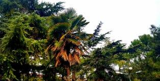 palm tree in autumn stock photo