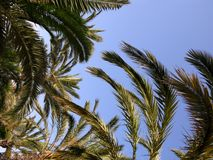 Palm Tree Background Stock Image