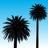 Palm Tree Background Royalty Free Stock Photos