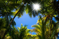Palm tree background Royalty Free Stock Photography