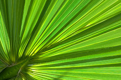 Palm tree background Stock Photography