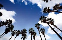 Palm Tree Background Stock Photo