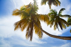 Palm tree background Royalty Free Stock Image