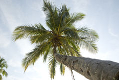 Palm tree background from below Royalty Free Stock Photo